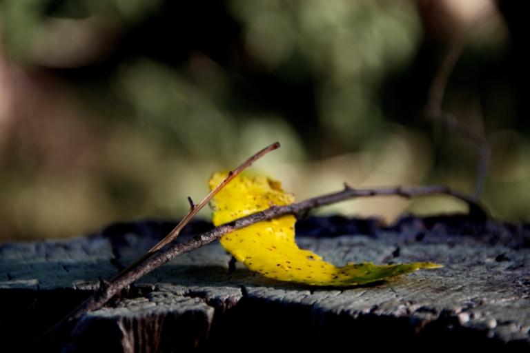hoja amarilla sentada en un árbol tocando el violín