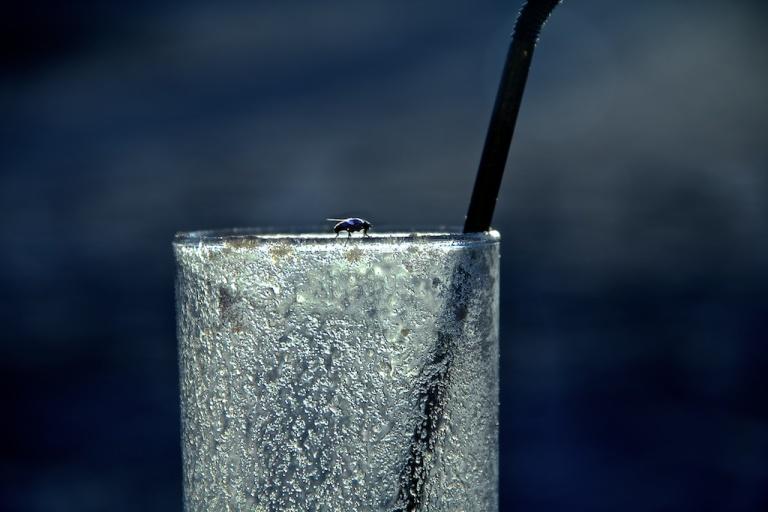 Mosca posa sobre vaso en Cabo Polonio