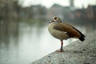 F el super pájaro